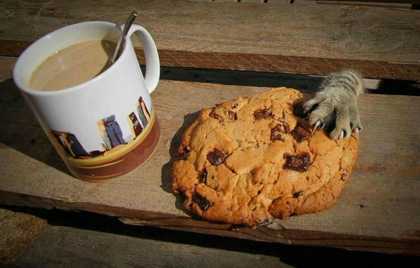 cat and COOLIE and COFFEE CL_JCddVEAAAKJV-1